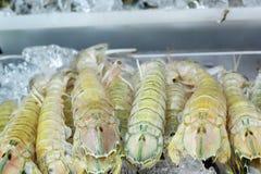 Fresh mantis shrimp on ice Stock Photography
