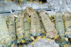 Fresh mantis shrimp on ice Stock Photos