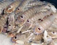 Fresh mantis shrimp for sale in fish market Stock Image