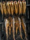 Fresh marine fish Stock Images
