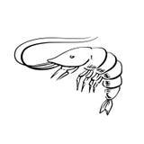 Fresh marine shrimp or prawn sketch Royalty Free Stock Photos