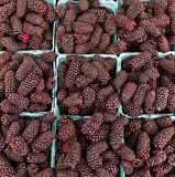 Fresh Marionberries on display Stock Images