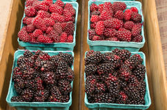 Fresh Marionberries and Tayberries in baskets Royalty Free Stock Images