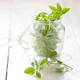 Fresh marjoram Stock Photos