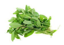 Fresh marjoram herb Stock Photos