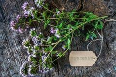 Free Fresh Marjoram Herb Stock Images - 96878294