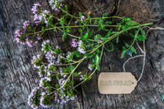Fresh marjoram herb stock images