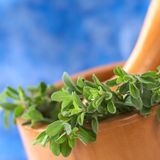 Fresh Marjoram in Mortar Stock Photos