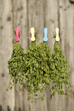 Fresh marjoram. Origanum majorana hang on string Royalty Free Stock Photos