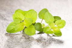 Fresh marjoram on stone background. Royalty Free Stock Images