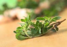 Fresh Marjoram Twig Stock Images
