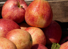 Fresh market apples Royalty Free Stock Photography
