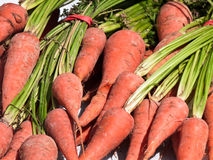 Fresh market carrots stock photography