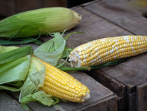 Fresh market corn from Virginia Royalty Free Stock Image