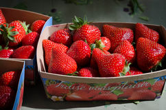 Fresh Market Strawberries from France. Beautiful photograph of fresh market strawberries for sale at the Wednesday market in Uzes, Provence royalty free stock images