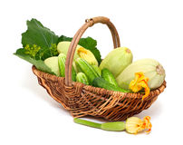 Fresh marrow and cucumbers in a basket. Isolated on white background Royalty Free Stock Photography