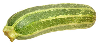 Fresh Marrow Squash Royalty Free Stock Photos