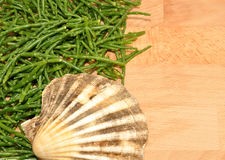 Fresh Marsh Samphire. A coastal plant with vibrant green stalks and a crisp salty taste Royalty Free Stock Photography