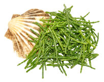 Fresh Marsh Samphire. A coastal plant with vibrant green stalks and a crisp salty taste Royalty Free Stock Images