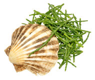 Fresh Marsh Samphire. A coastal plant with vibrant green stalks and a crisp salty taste Stock Photos