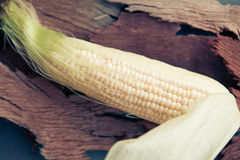 Fresh maze corn with cornsilk Stock Image