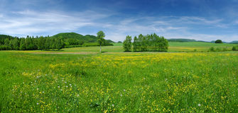 Fresh meadow Stock Image