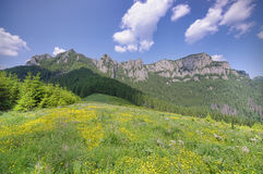 Fresh meadow. Ceahlau mountain landscape in summer, Romanian Carpathians Stock Image