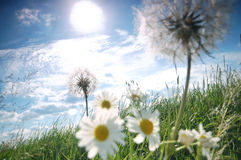 Fresh meadow background Royalty Free Stock Photo