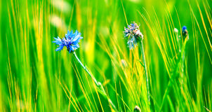 Fresh meadow background Royalty Free Stock Images