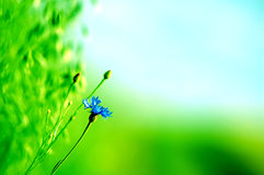 Fresh meadow background Stock Photography