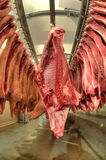 Fresh meat in a cold cut factory Royalty Free Stock Image