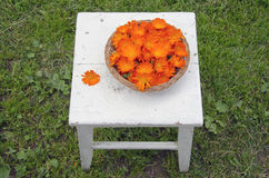 Fresh medical calendula flowers Stock Images