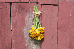 Fresh medical calendula marigold flower bunch on old barn wall Stock Photography