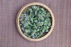 Fresh medical herb lemon-balm in basket Royalty Free Stock Photography