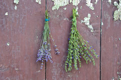 Fresh medical herbs lavender and hyssop (Hyssopus officinalis) on old wall. Fresh medical herbs lavender and hyssop (Hyssopus officinalis) on old wooden farm royalty free stock photos