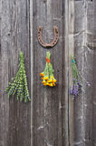 Fresh medical herbs lavender, marigold (calendula) and hyssop (Hyssopus officinalis) on wall. Fresh medical herbs lavender, marigold (calendula) and hyssop ( stock images
