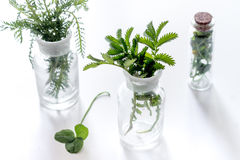 Fresh medicinal herbs in glass on white background Stock Image