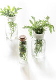 Fresh medicinal herbs in glass on white background Royalty Free Stock Photo