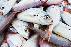 Fresh mediterranean fish Stock Image