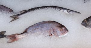 Fresh mediterranean fish on ice Stock Photos