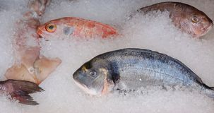 Fresh mediterranean fish on ice Stock Images