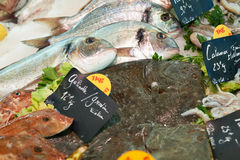 Fresh mediterranean fish on market in France Royalty Free Stock Photo