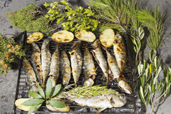 Fresh Mediterranean fishes on BBQ. Fresh Mediterranean fishes with potatoes, rosemary and Mediterranean herbs, on traditional charcoal BBQ royalty free stock photo