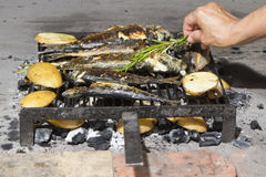 Fresh Mediterranean fishes on BBQ Royalty Free Stock Images