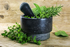 Fresh mediterranean herbs, oregano, rosemary and sage in a morta Stock Image