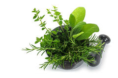 Fresh mediterranean herbs, oregano, rosemary and sage in a morta Royalty Free Stock Photography