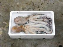 Fresh Mediterranean octopus. Polystyrene box Stock Photography