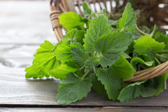 Fresh melissa in a basket. On a wooden surface, selective focus royalty free stock photo