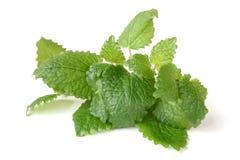 Fresh melissa leaves Stock Photos
