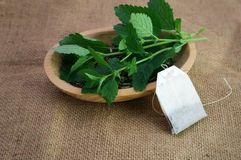 Fresh Melissa stalks with leaves on dry herb in wooden bowl with a tea bag stock photo